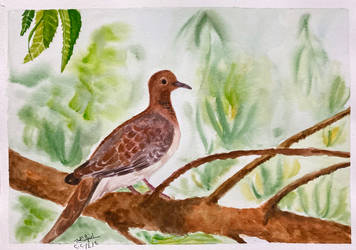 laughing dove by ebtehalR