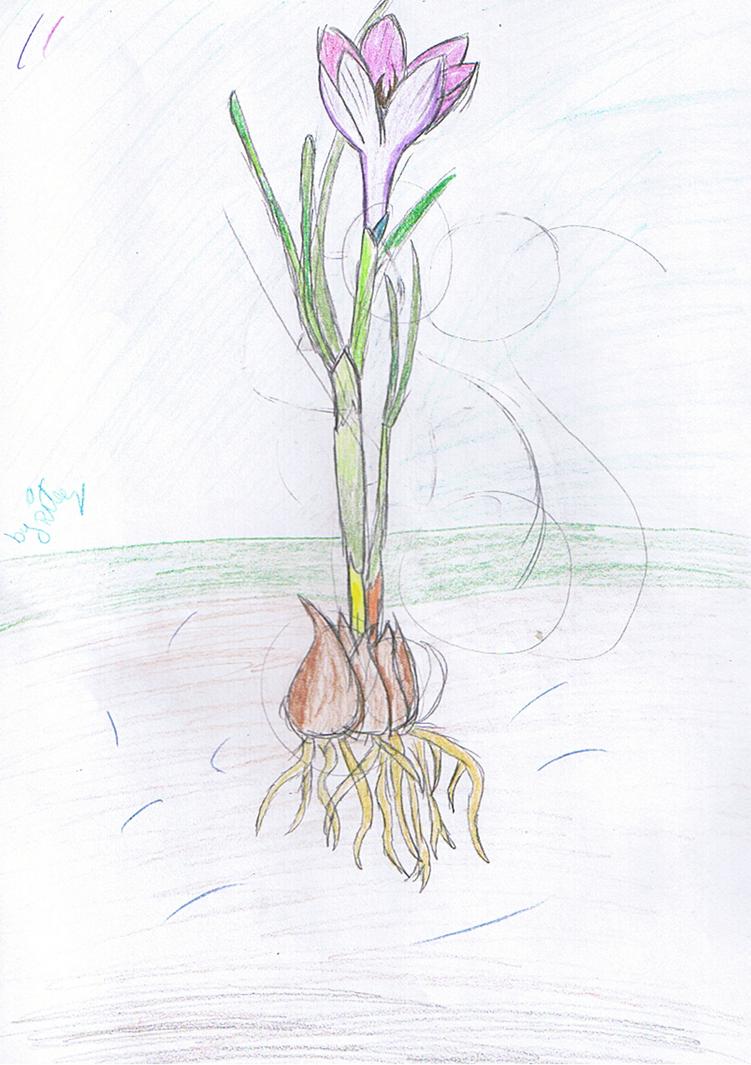 kwiat1_by_rita_and_skipper-d76oih9.png