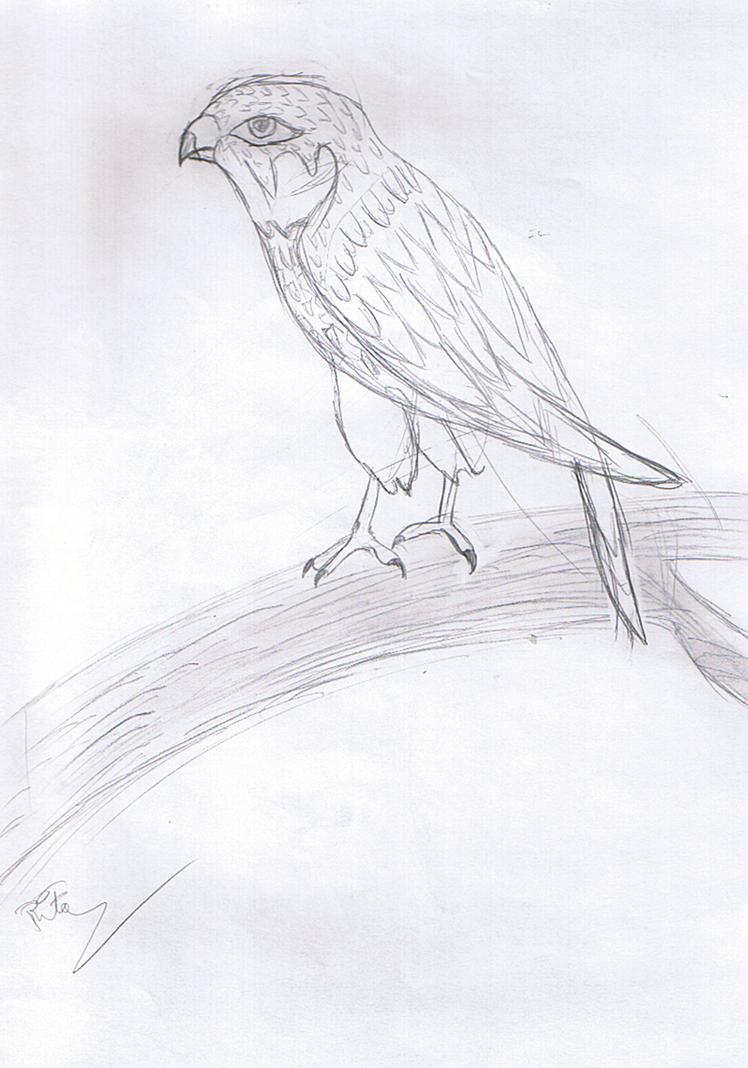 bird3_by_rita_and_skipper-d76ojcl.png
