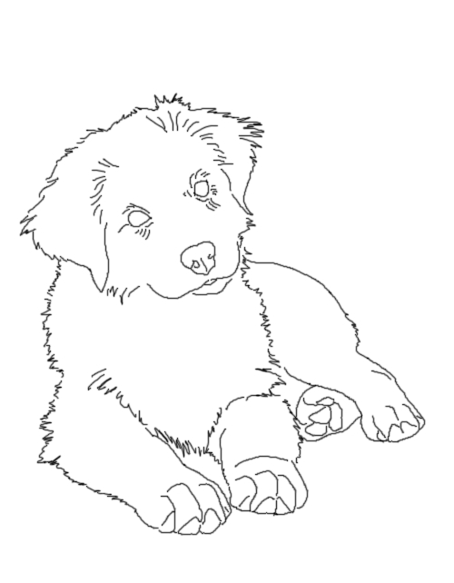 Line Drawings Of Australian Animals : Aussie pup lines by australianshepkennel on deviantart