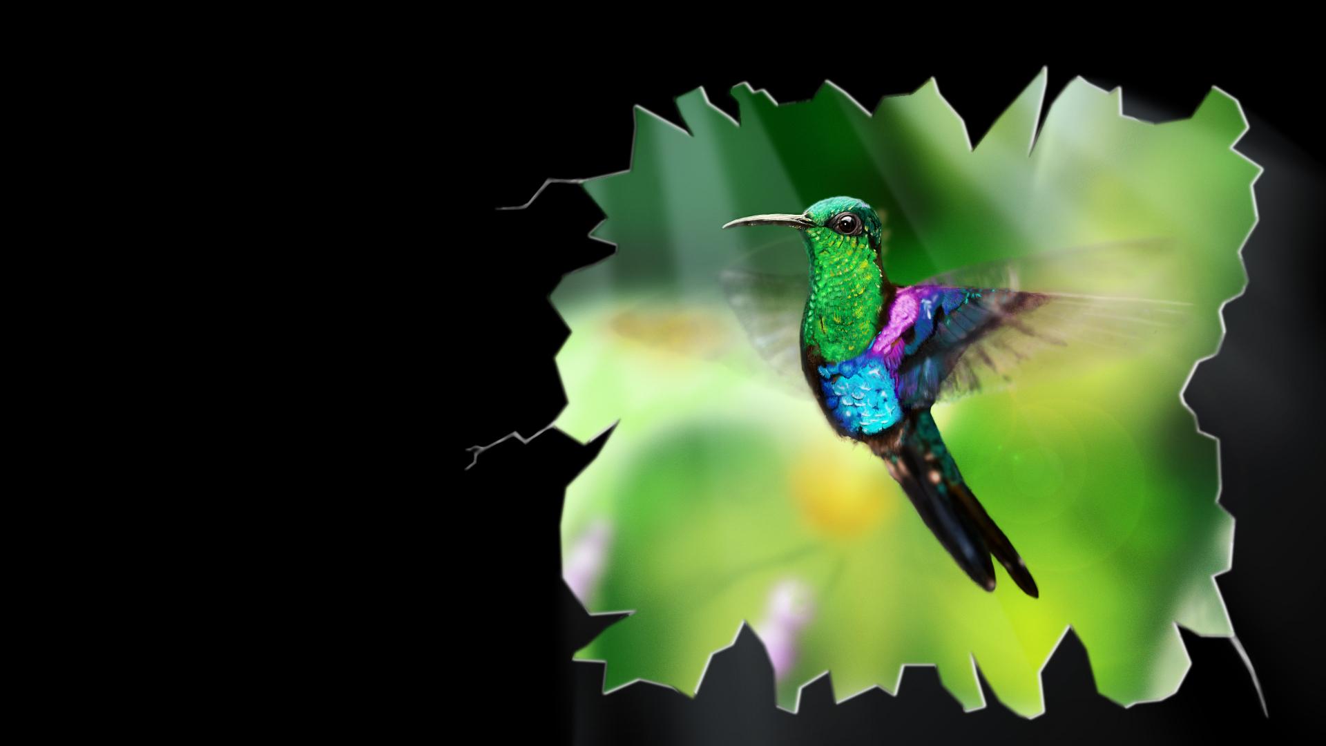 De Drukke Kolibrie Wallpaper