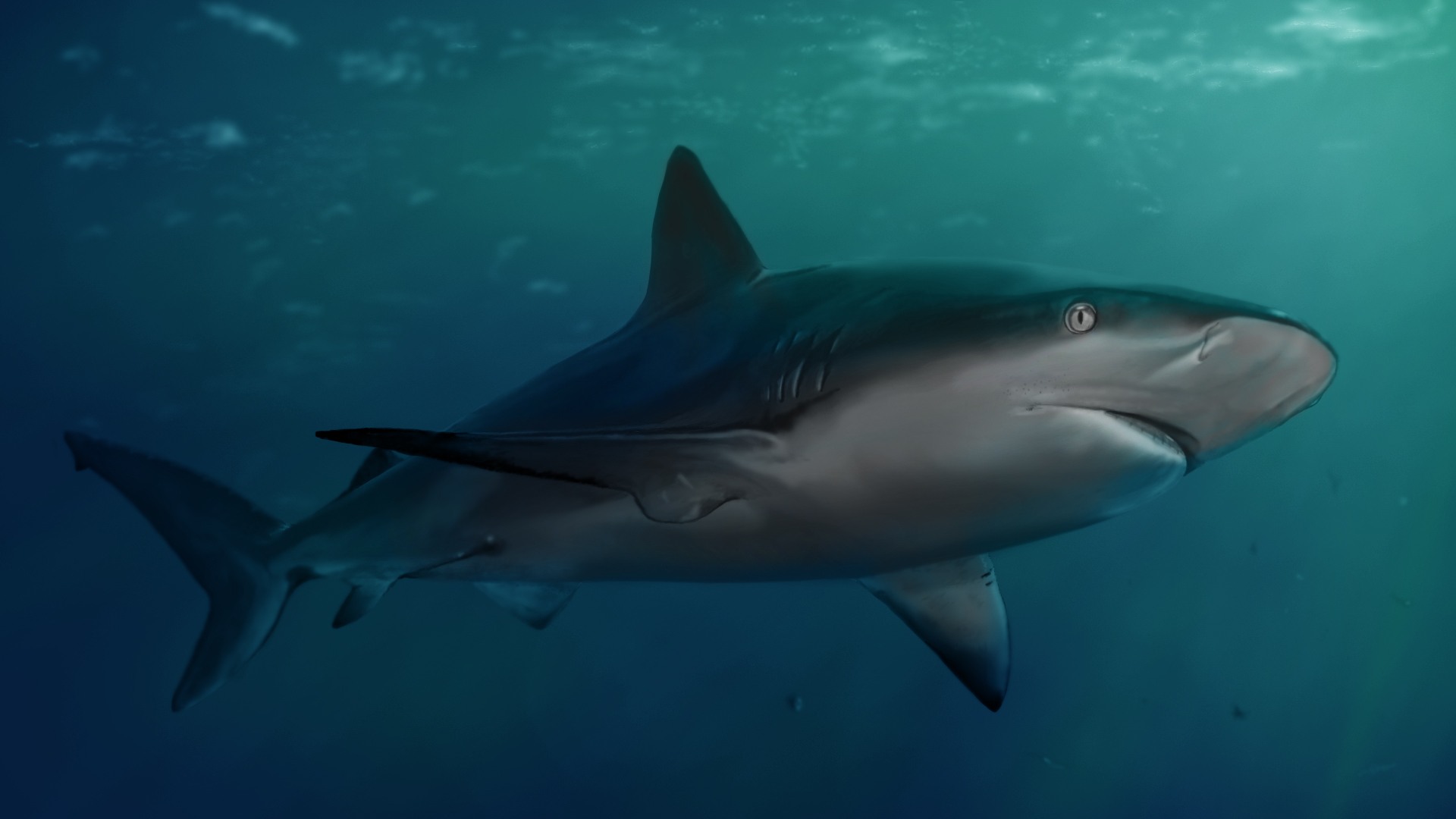 25 Tiger Shark Pictures | Under the Sea | Pinterest