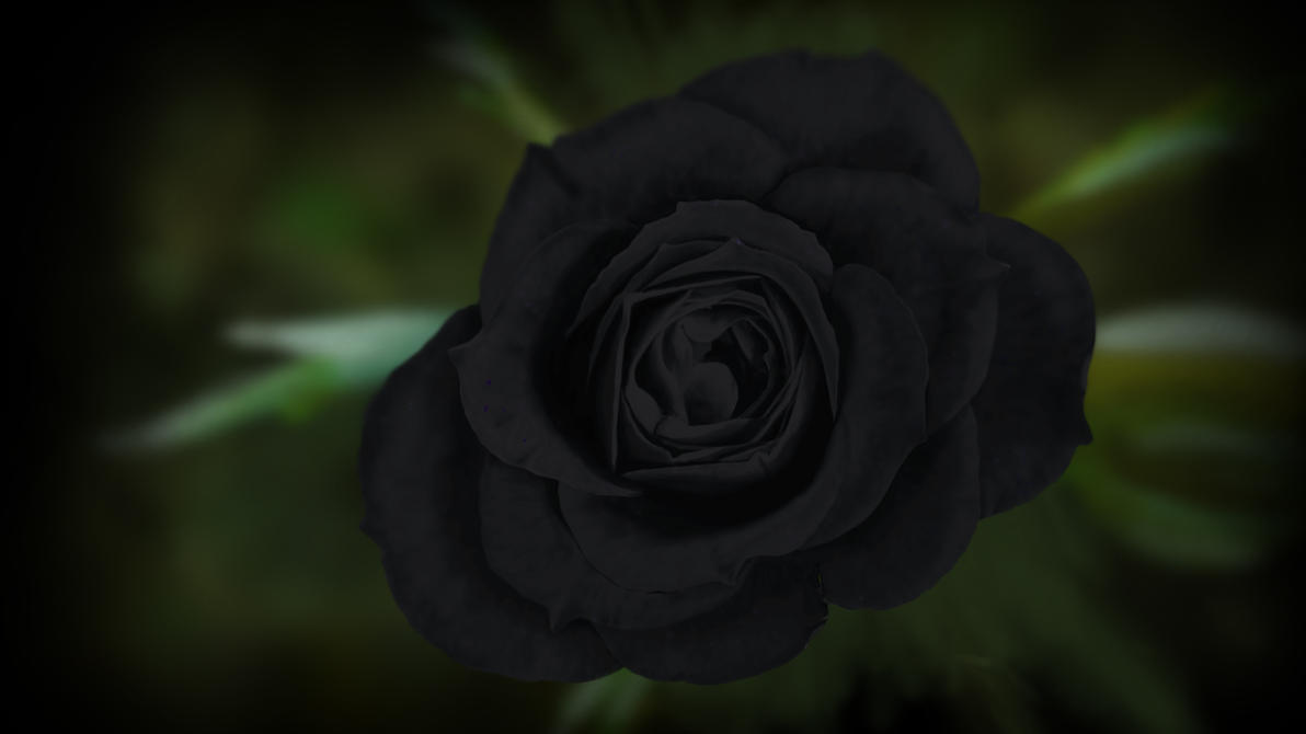 painted Wallpaper - black Rose by dasflon