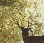 king of deers