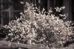 les fleurs du printemps
