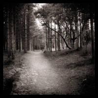 Forest by Hoojio