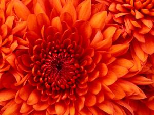 D3M0NHUNT3R117's Profile Picture
