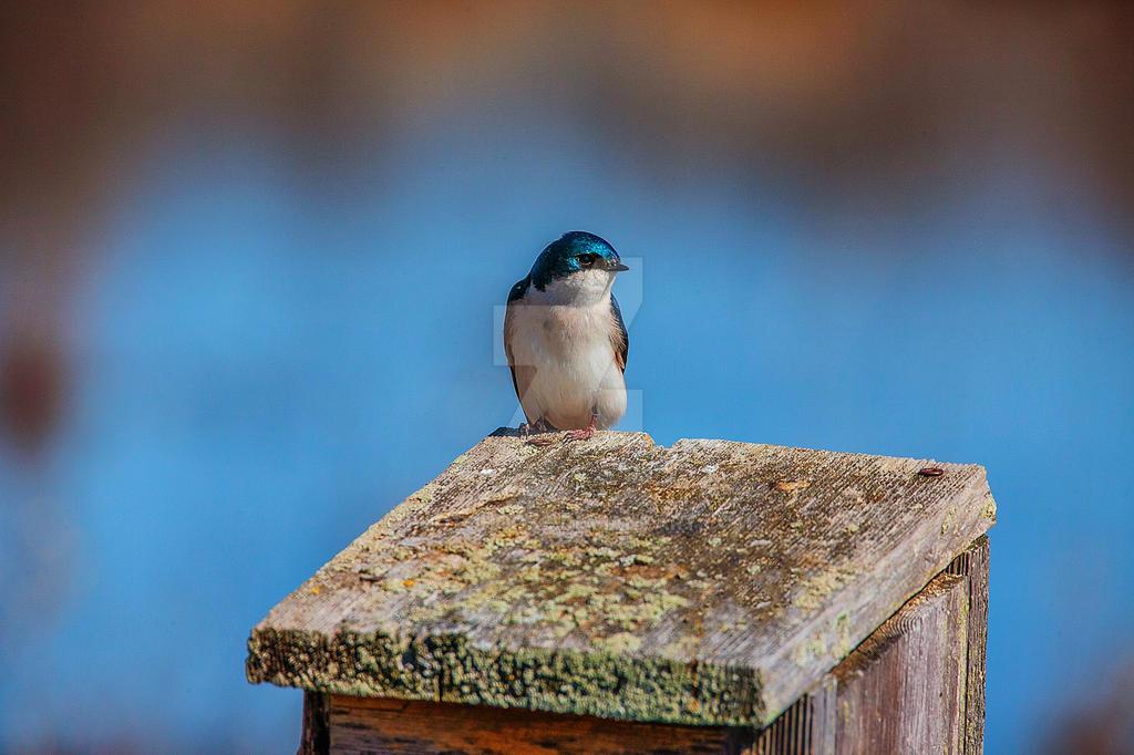 Blue by photohooks