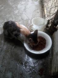Un dulce desayuno, para una gata bella
