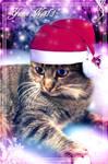 Yumi Noel