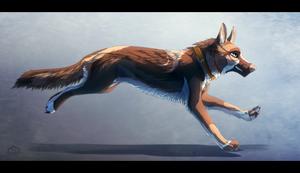 Happy German Shepherd. by Suzamuri