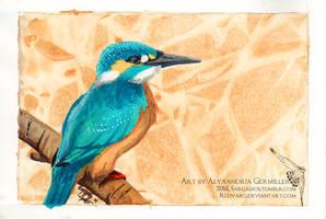Kingfisher by SargassosArt