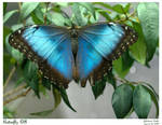 Butterfly 08 by foxprimephotos