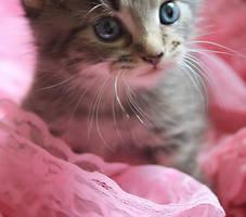 kitten by amorosaBlack