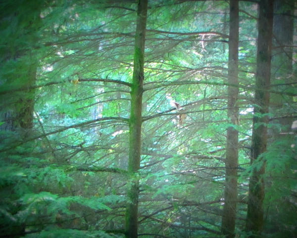 ForestPark by shirrey