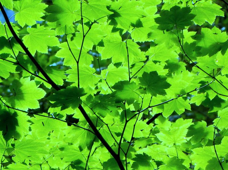 light through leaves by shirrey