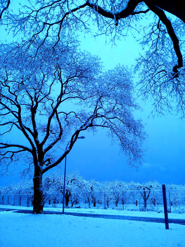 Sudden Snow by sDoost