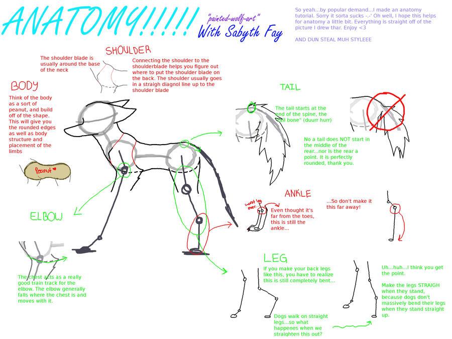Wolf Anatomy For Artists Choice Image - human body anatomy