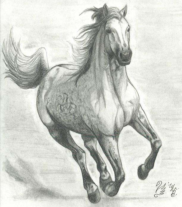 Running Horse by WendysKaleidoscope on DeviantArt - photo#7