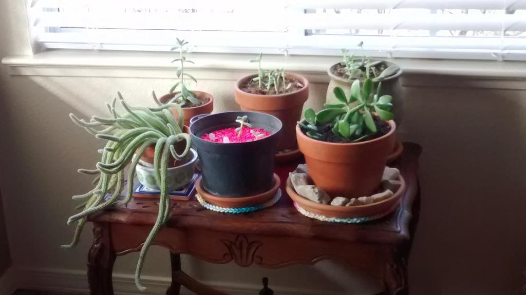 Plant Babies 1 by WendysKaleidoscope