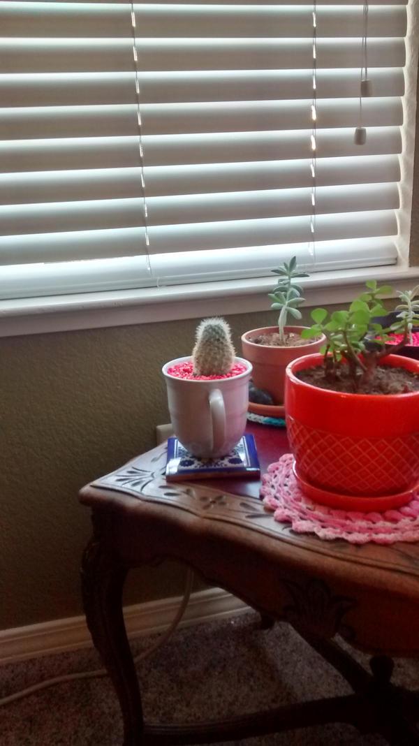 The Cactus Bump by WendysKaleidoscope