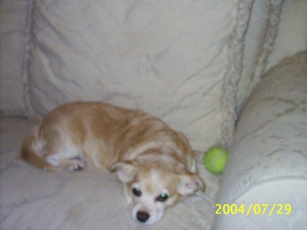 my_dog_daisy_by_aeronator-d41xgqy.jpg