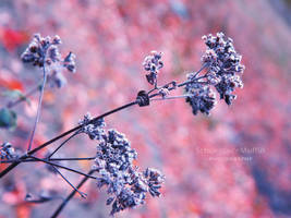 Changes by Silvia-Pp