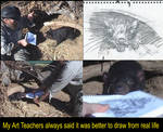 Sketching the Tasmanian Devil