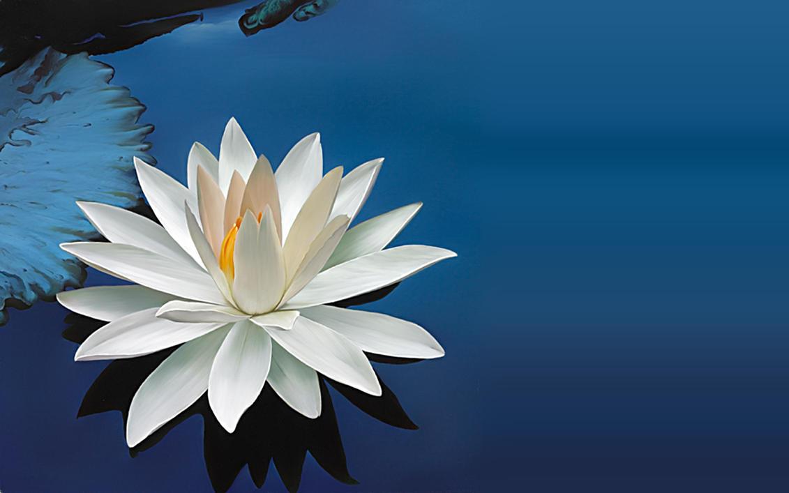 Like a lotus by nucu on deviantart like a lotus by nucu izmirmasajfo