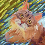 Cat-astrofe felino.