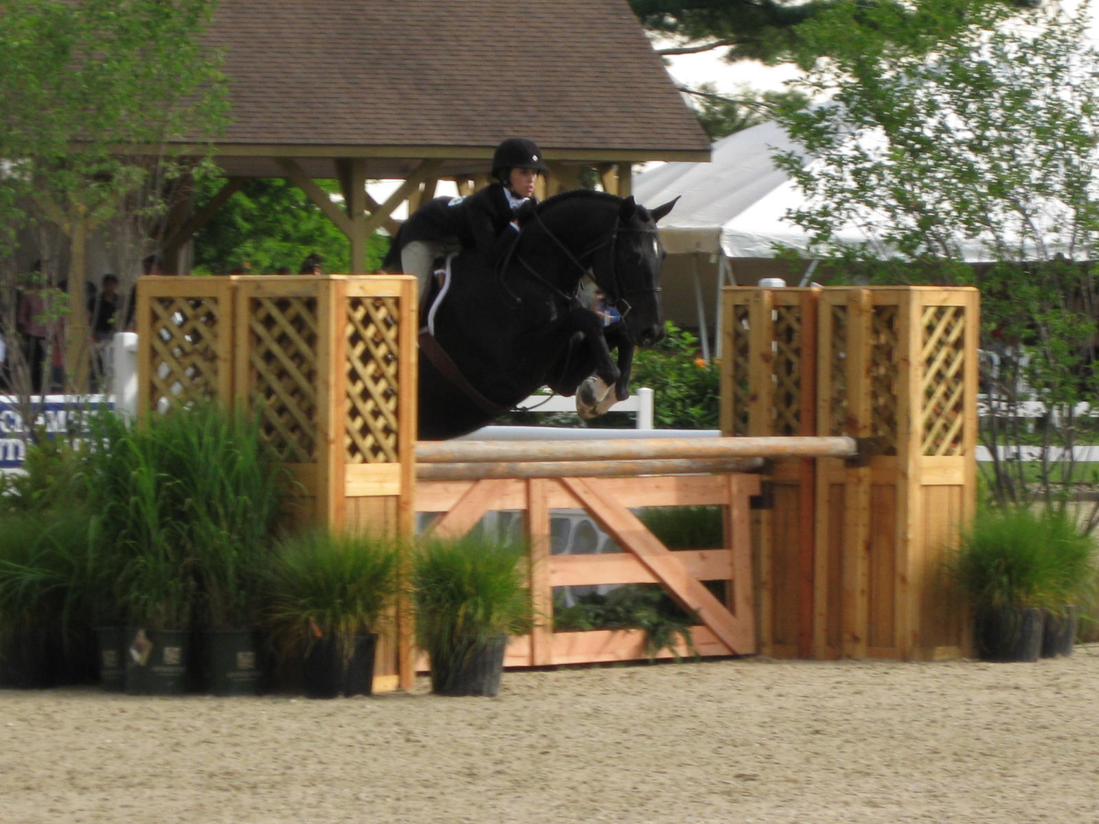 Black Horse Jumping Oxer by Hunterjumper25Black Horse Jumping