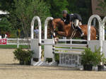 Bay Jumping White Oxer by Hunterjumper25