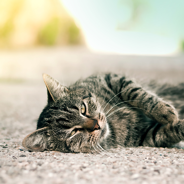 Good morning kitten by piximi