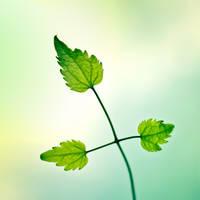 leaf by piximi
