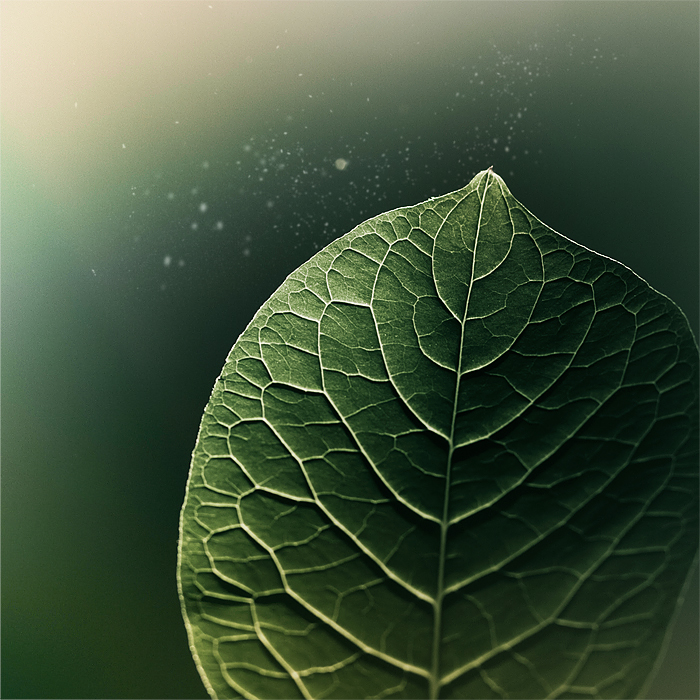 Dream Leaf by piximi