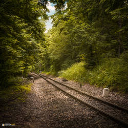 In search of the woodland train