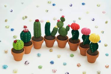 Cacti Group Photo