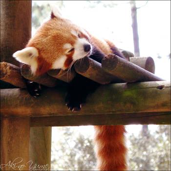 Firefox by Aki-no-Yume