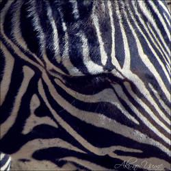 Zebra by Aki-no-Yume