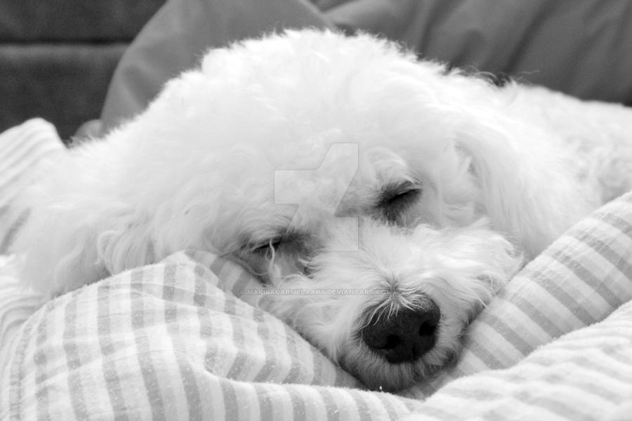 Sleep Well Little One by marisacarmelaart