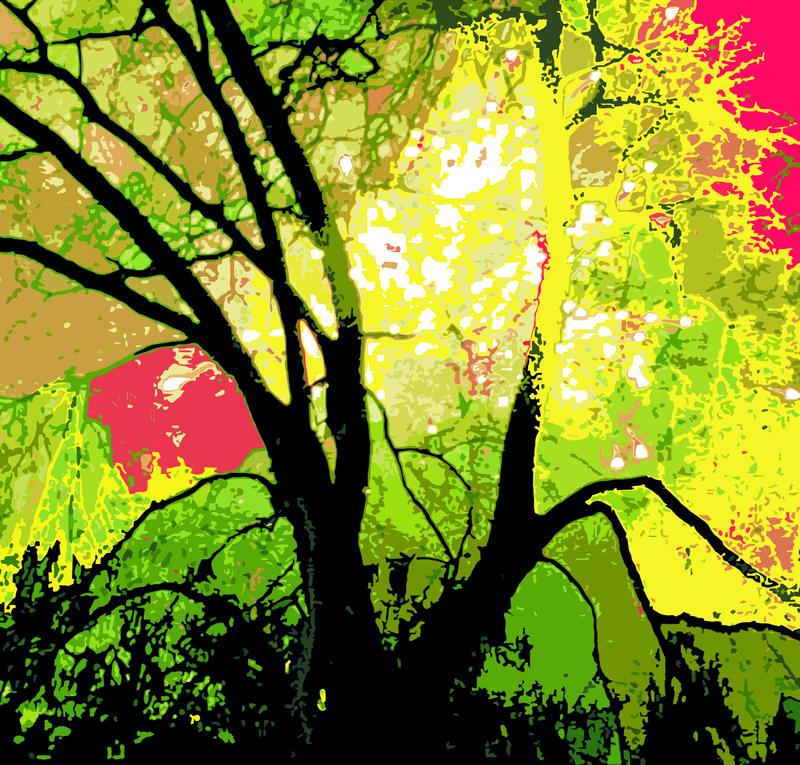 Firework Tree