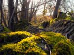 Moss and Trees by River Hafren