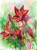 Red Lilies by linandara
