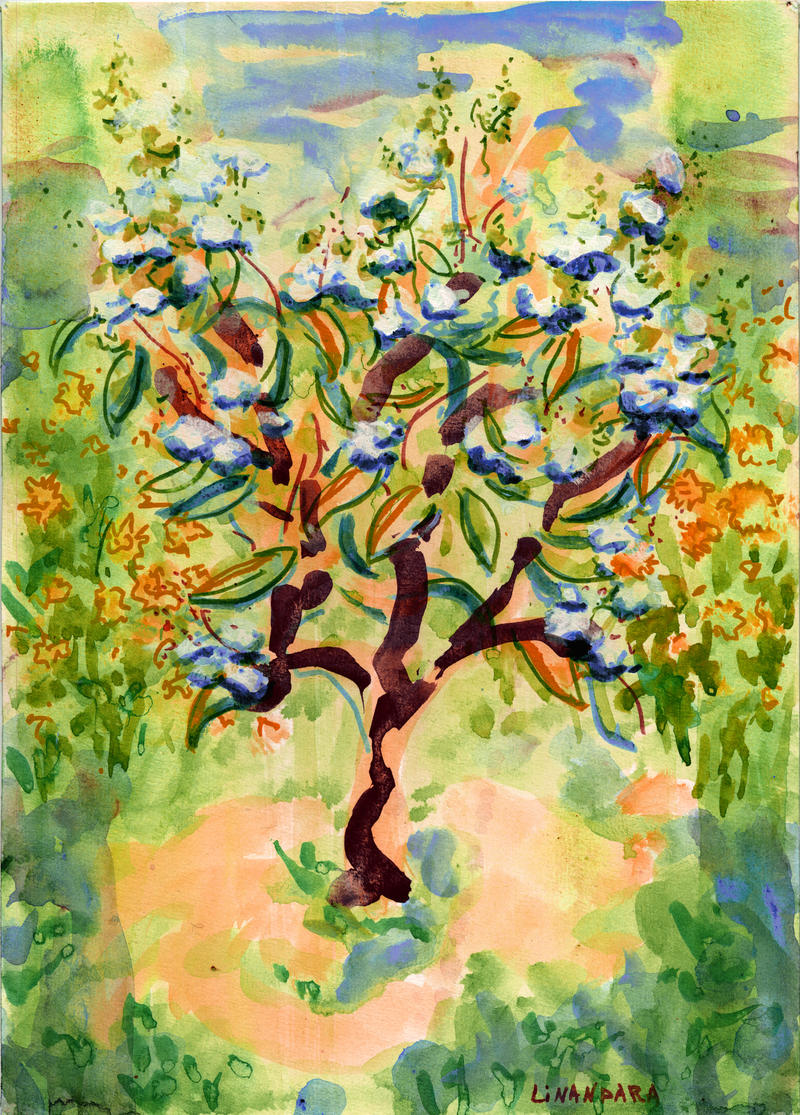 Hydrangea paniculata by linandara