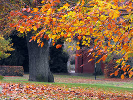 Fall in Newtown by linandara