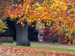 Fall in Newtown