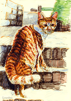 Cat in the Midwinter