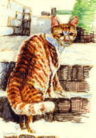 Cat in the Midwinter by linandara