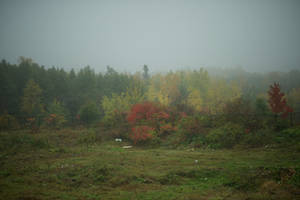 Fall Background by Snowenne