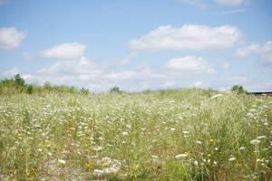 Flower Field Background 2 by Snowenne